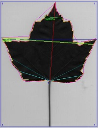 DJ-GX220植物叶片图像分析系统