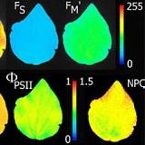 PlantScreen高通量植物表型成像分析系统(自动传送版)