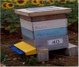 ApiSCAN-Plus蜜蜂计数器
