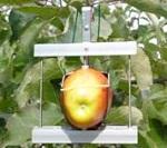 PE-PE07 植物生理生态系统
