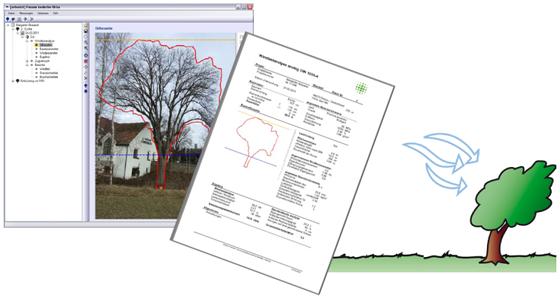 Arbostat树木抗风分析软件