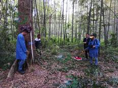 TRU树木雷达检测系统为古树名木保护保驾护航