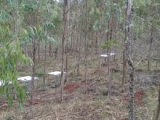 林间穿透雨原理及应用