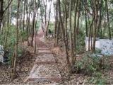 树干截流记录仪原理及案例
