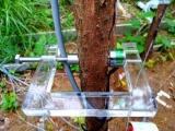 PSY水势仪和DD-S茎秆测量仪在叶树马尾松上顺利安装
