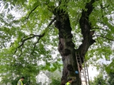 点将科技应邀参加广西柳州市园林局古树保护检测复壮培训会议