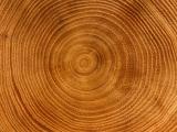 为什么要研究树木年轮