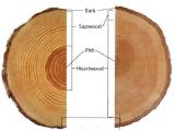 年轮比较明显的树木类型