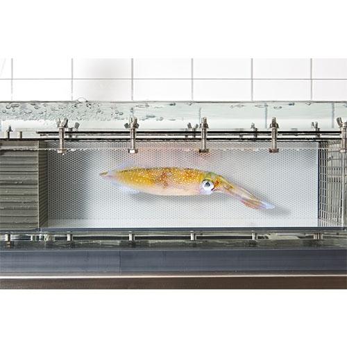 DAQ-BT鱼类游泳行为记录系统