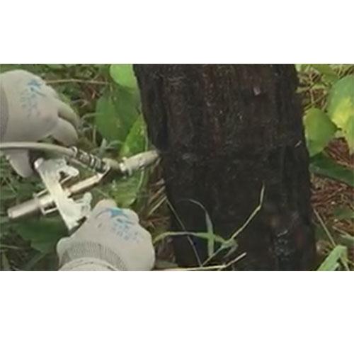 树木微创注射技术